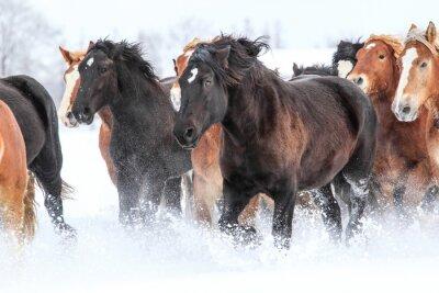 Плакат 冬 の 馬