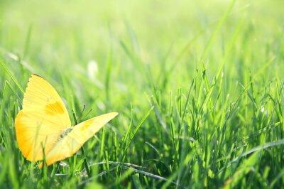 Плакат Желтый бабочка Зеленый фон травы