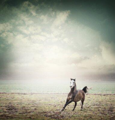 Плакат Молодые лошади, работающие на пастбище и фоне неба, тонированное