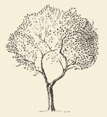 Плакат Молодые оливковое дерево вектор иллюстрация рисованной