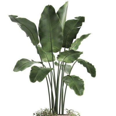 Наклейка 3d illustration of tropical plants banana