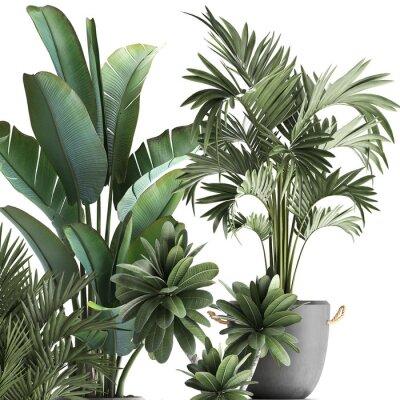 Наклейка 3d illustration of tropical plants on white background