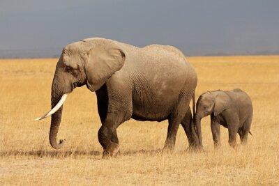 Наклейка Африканский слон с теленка, Национальный парк Амбосели