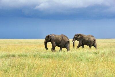 Наклейка Африканские слоны