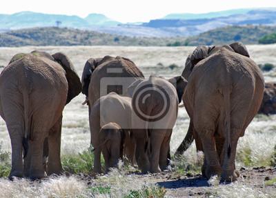 Наклейка Африканские слоны, идущие через Дамараленд
