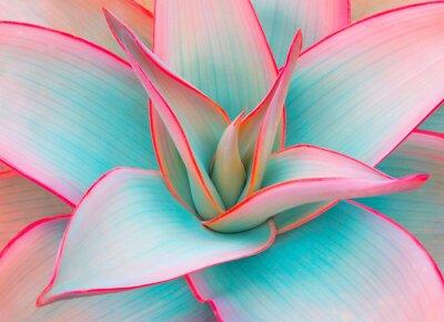 Наклейка листья агавы в модных пастельных тонах для дизайна фона