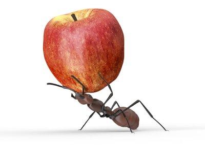Наклейка муравей поднимает яблоко, изолированных на белом