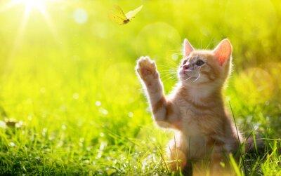 Наклейка искусство молодых кошка / котенок охота божья коровка с подсветкой и