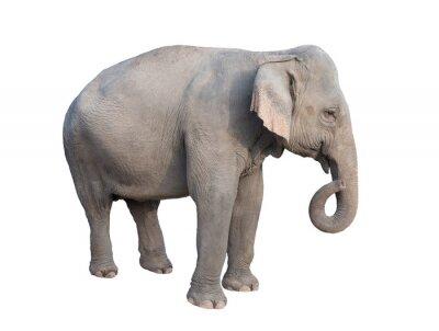 Наклейка Азия слон