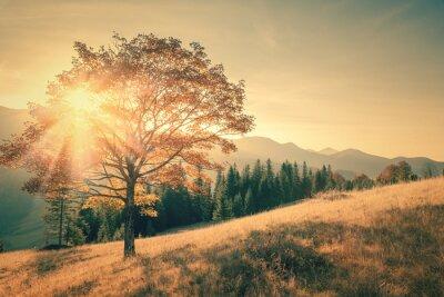 Наклейка Осеннее дерево и луч теплый день пейзаж тонированное в старинных