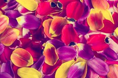 Наклейка Фон из лепестков тюльпанов