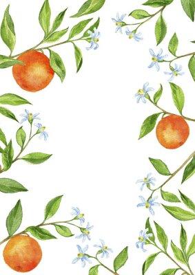 Наклейка фон с фруктами ветвей деревьев, цветов, листьев и апельсины