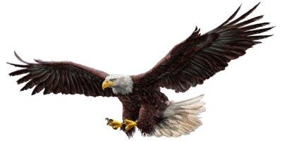 Наклейка Белоголовый орлан летающий рисовать и рисовать на белом фоне векторные иллюстрации.