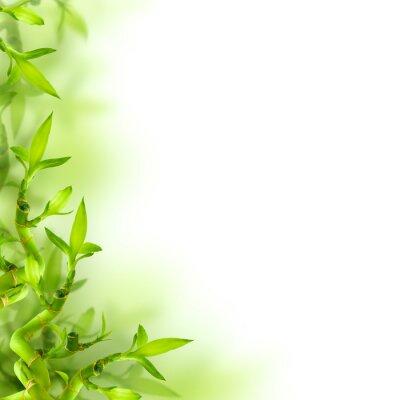 Наклейка Бамбук и зеленые листья, фон