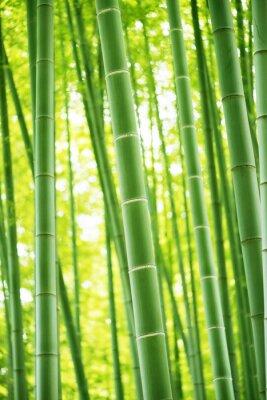 Наклейка Бамбуковый лес
