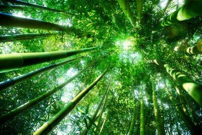 Наклейка бамбуковый лес - дзен концепции