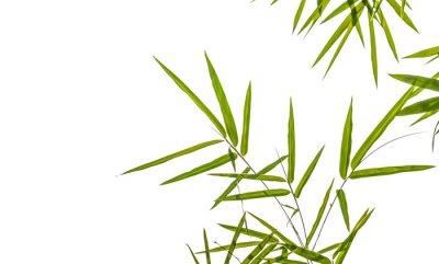 Наклейка листья бамбука на белом фоне, отсечения путь ВКЛЮЧАЕТ
