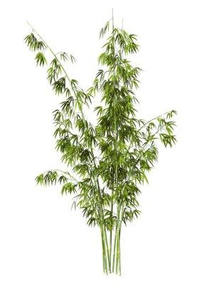 Наклейка Бамбук Дерево