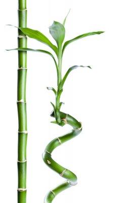Наклейка Bambou дзен