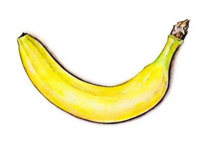 Наклейка Акварель иллюстрации. Тропические фрукты