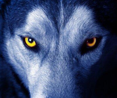 Наклейка красивые глаза дикого волка.