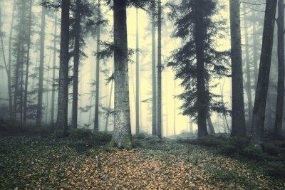 Наклейка Красивые туманный лес дерево сказочная. Магия туманный свет в лесу.