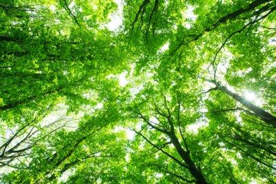 Наклейка красивый зеленый лес
