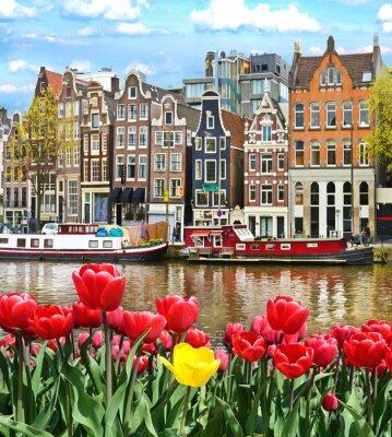 Наклейка Красивый пейзаж с тюльпанами и домов в Амстердаме, Голландия