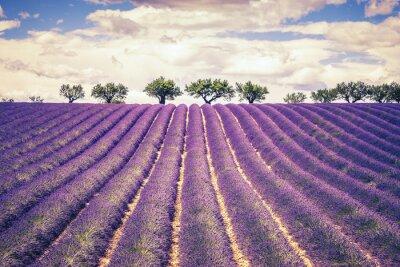 Наклейка Красивое поле Лаванда