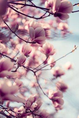 Наклейка Красивые розовые цветы магнолии