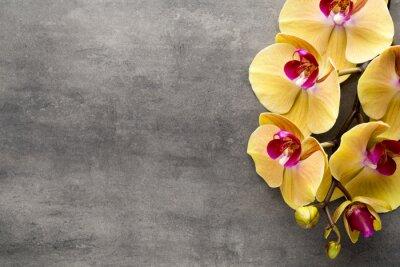 Наклейка Красивые розовые орхидеи на сером фоне.