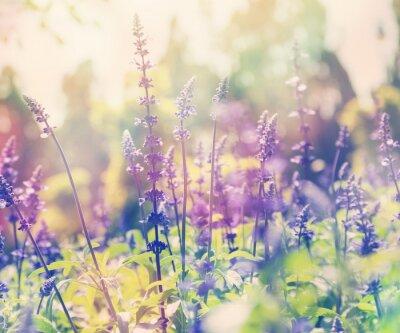 Наклейка красивый фон летом, лаванды поле, крупным планом