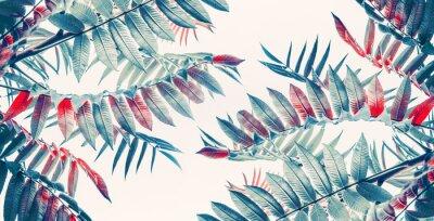 Наклейка Красивый фон тропических листьев, баннер