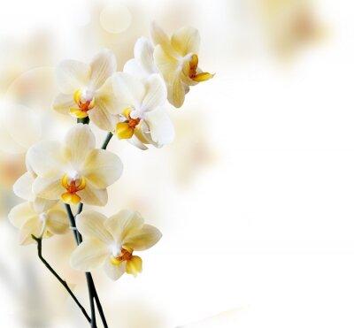 Наклейка Красивый белый орхидея