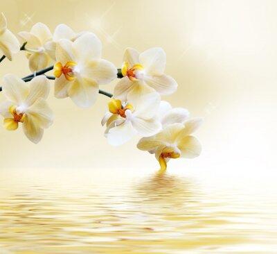 Наклейка Красивый белый орхидеи