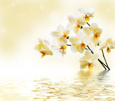 Наклейка Красивые белые орхидеи