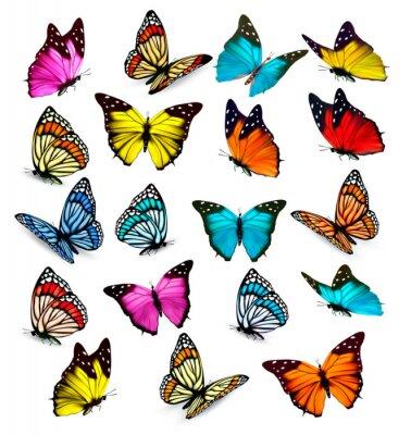 Наклейка Большая коллекция красочных бабочек. Вектор