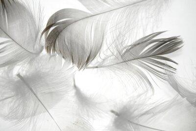 Наклейка перо птицы на белом фоне в качестве фона для дизайна