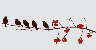 Наклейка птицы на ветке рябины