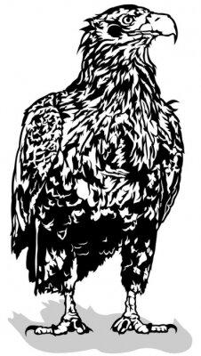 Наклейка Черно-Белый Орел - Контурные иллюстрации, вектор