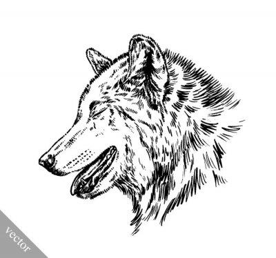 Наклейка черный и белый выгравировать изолированных волк