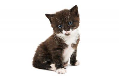 Наклейка черно-белый котенок, изолированные