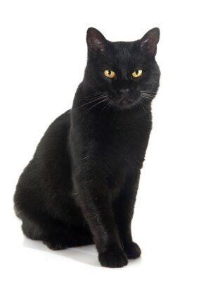Наклейка черная кошка