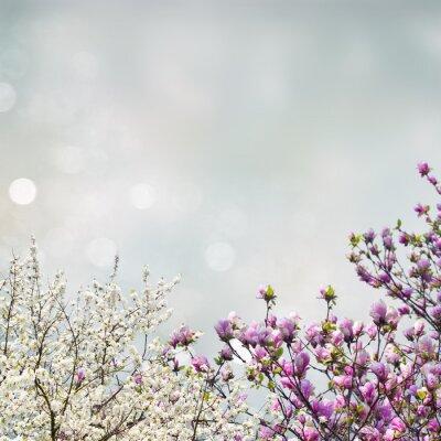 Наклейка Цветущее дерево магнолии