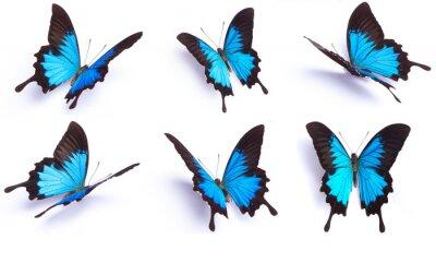 Наклейка Синий и красочные бабочки на белом фоне