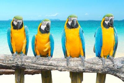 Наклейка Синий и золотой ара на тропический красивый пляж и море
