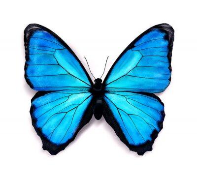 Наклейка Голубая бабочка