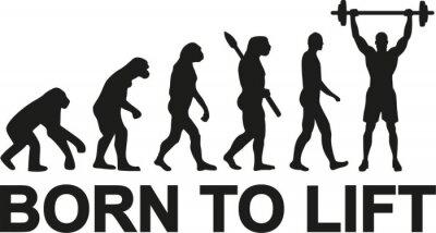 Наклейка Рожденный поднять эволюцию тяжелоатлет