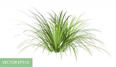 Наклейка ветка с зелеными листьями на белом