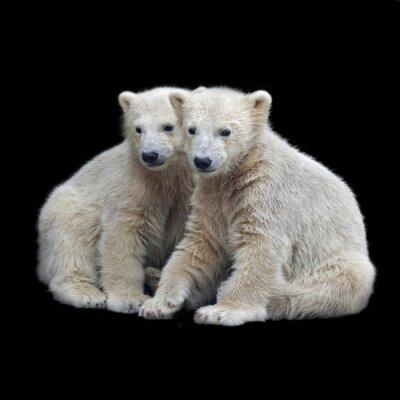 Наклейка Братство полярных медвежат